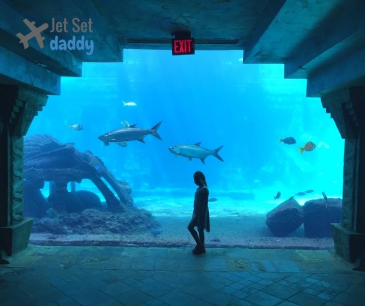 Atlantis Hotel Bahamas aquarium