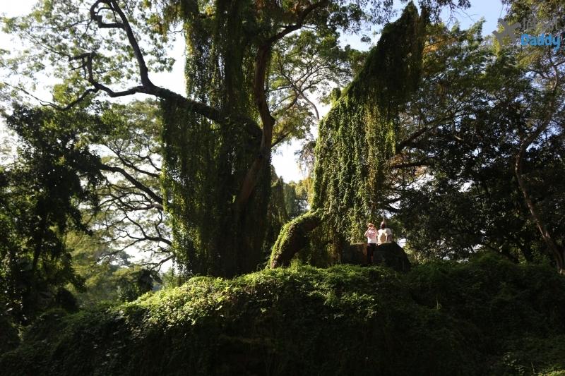 nature cuba